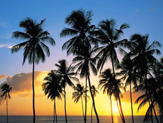 椰子湾基地